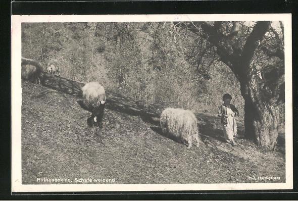AK Ruthenenkind, Schafe weidend