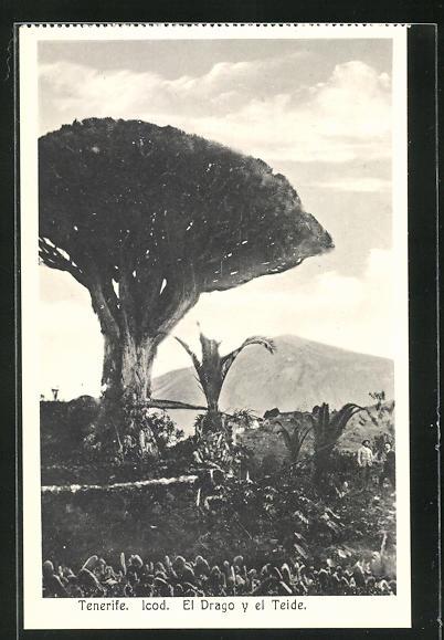 AK Tenerife, El Drago y el Teide