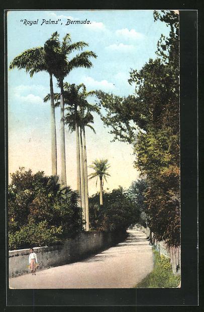 AK Bermuda, The Royal Palms