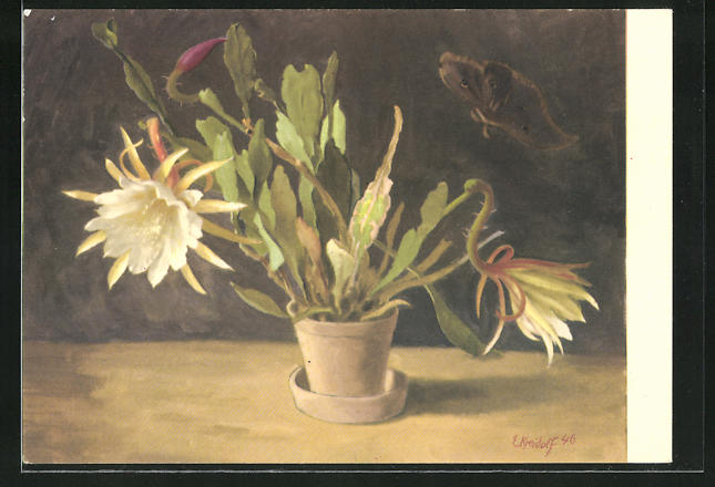 Künstler-AK Ernst Kreidolf: Kaktus, blühende Topfpflanze