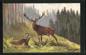 Künstler-AK M. Müller jun.: Hirsch und Hirschkuh auf einer Waldlichtung