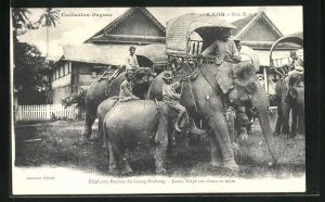 AK Elefanten in Laos, Elephants Royaux de Luang-Prabang, Jeune Elephant tetant sa mere