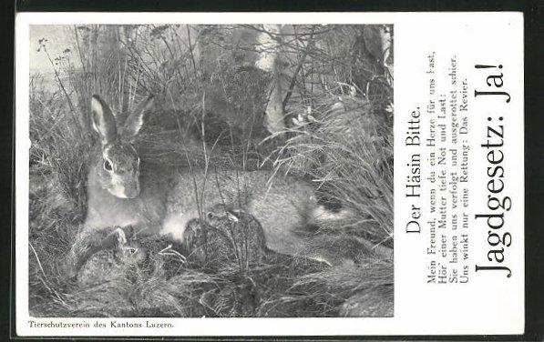 AK Tierschutz, Häsin mit Jungtieren, Der Häsin Bitte, Ja! zum Jagdgesetz