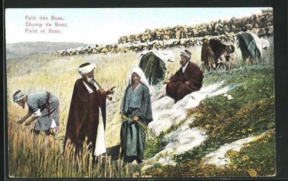 AK Palästina, Auf dem Feld des Boas