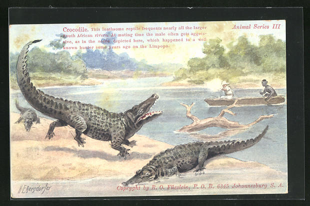AK Männer im Boot schiessen auf Krokodile am Ufer