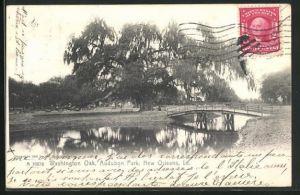 AK New Orleans, LA, Washington Oak, Audubon Park
