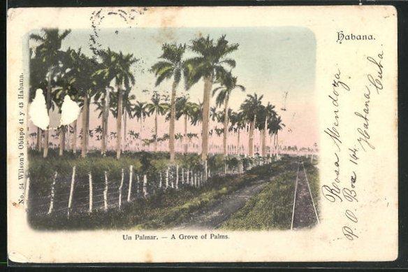 AK Habana, Un Palmar / A Grove of Palms