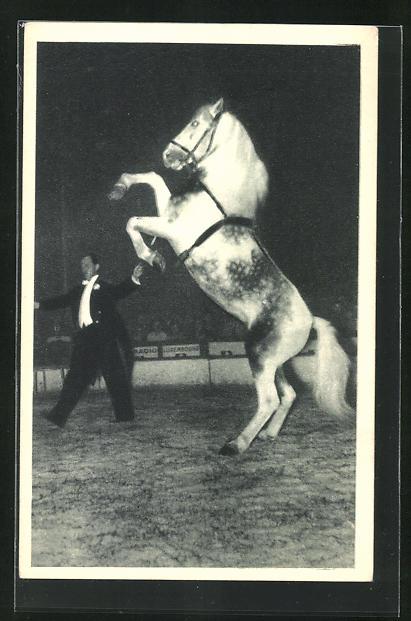 AK Zirkus, Radio-Circus, Dressur von Pferd in Manage, Pferd steht auf Hinterläufen