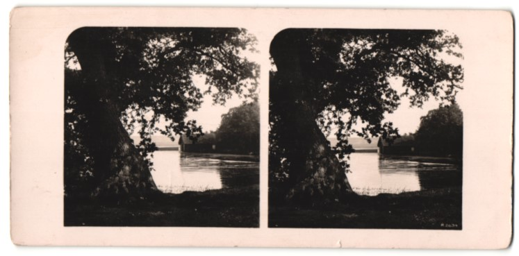 Stereo-Fotografie Ansicht Frensham, Motiv vom See