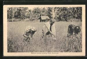 AK Zanzibar, Native women picking Rice, Reisernte in Sansibar