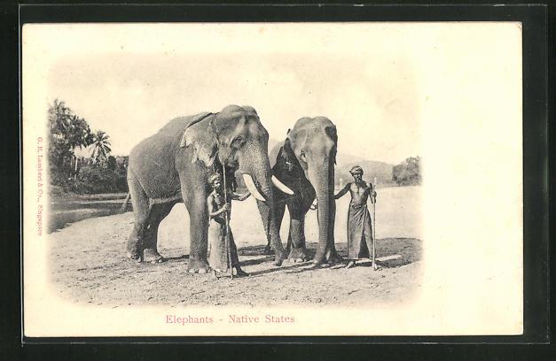 Relief-AK Elephants - Native States, Arbeits-Elefanten mit ihren Führern
