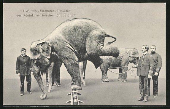 AK Königl. rumänischer Zirkus Sidoli, Dompteure mit Elefanten