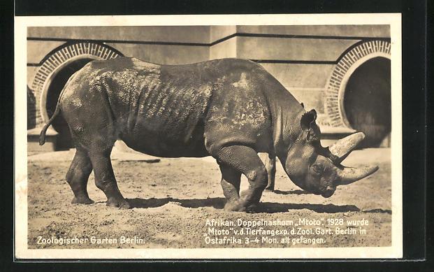 AK Berlin, Zoologischer Garten, Nashorn im Freigehege