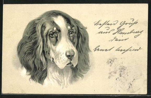 AK Jagdhund, Portrait mit treuen Augen