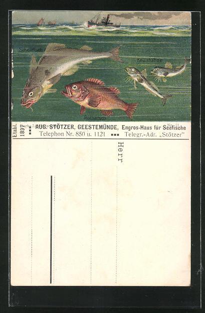 AK Geestemünde, Fische im Meer mit Dampfer, Rotbarsch, Knurrhähne, Schellfisch