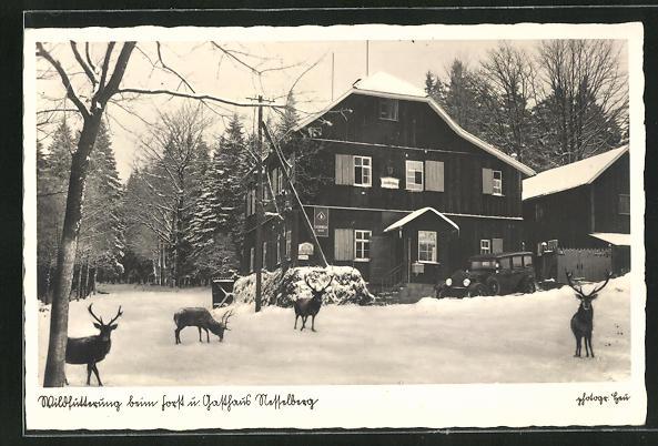 AK Finsterbergen, Gasthof Forsthaus Nesselberg im Schnee mit Hirschen