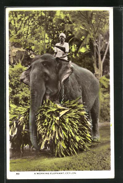 AK Ceylon, A working Elephant