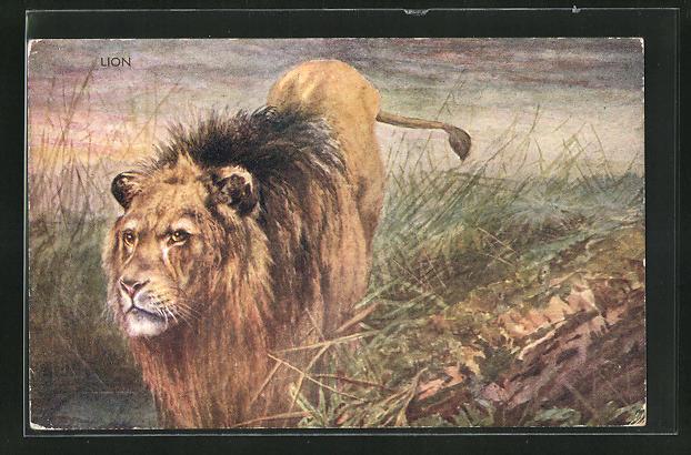 Künstler-AK Lion, Löwe pirscht sich an