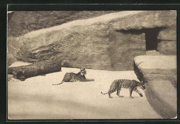 AK Nürnberg, Tigerschlucht im Tiergarten