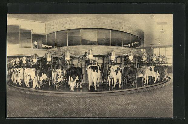 AK Plainsboro, NJ, The Walker-Gordon Rotolactor , cleans, washes and milks 50 cows