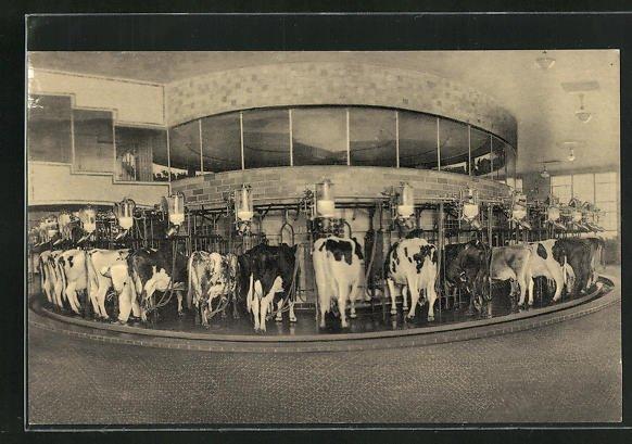 AK Plainsboro, NJ, The Walker-Gordon Rotolactor, cleans, washes, milks 50 cows