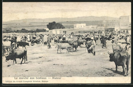 AK Mateur, Le marché aux bestiaux, Viehmarkt