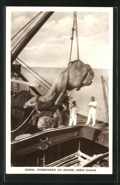 AK Aden, Camel Passenger on Board, Kamel wird auf ein Schiff verladen