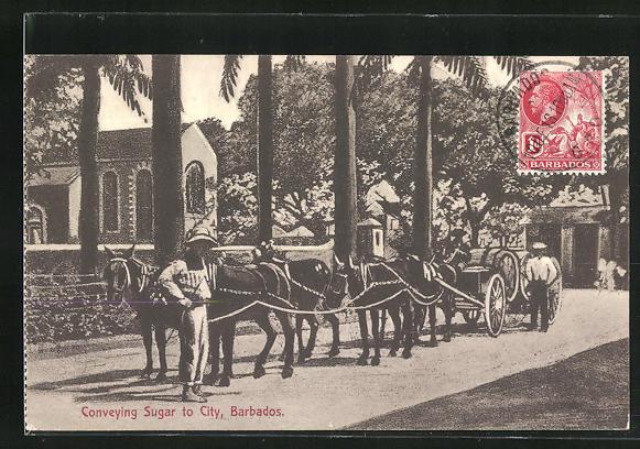 AK Barbados, Conveying Sugar to City