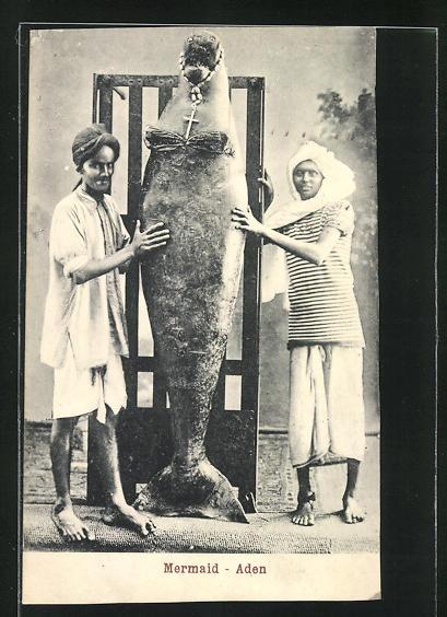 AK Aden, Mermais, Walross als Meerjungfrau