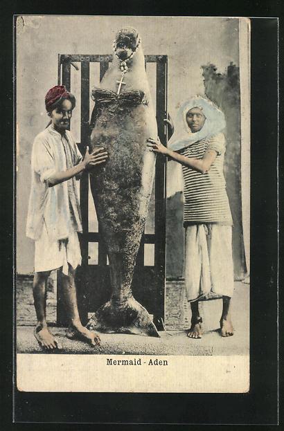 AK Aden, Mermaid, Seehund als Meerjungfrau
