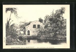 AK Saint-Pierre de la Martinique, Une Plantation aux Environs