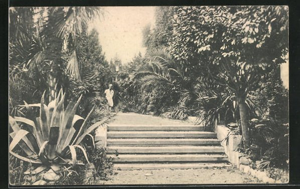 AK Sotschi, Treppe im Palmengarten