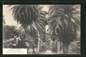 AK Fort-de-France, un Jardin aux Antilles