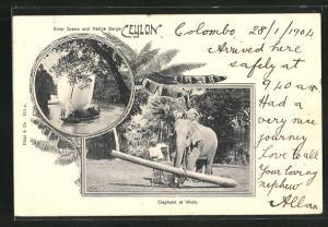 AK Ceylon, River Scene and Native Barge, Elephant at Work, Arbeitselefant