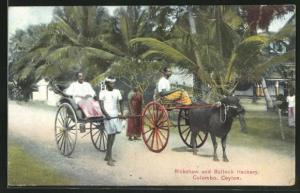 AK Colombo, Rickshaw and Bullock Hackery, Ochsenkarren und Rikscha