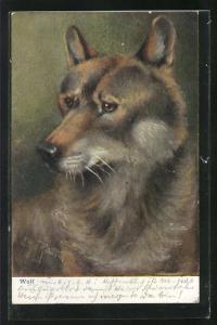 AK Wolf mit gutmütigem Blick