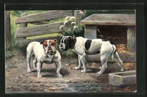 Künstler-AK Alfred Schönian: zwei Bulldoggen