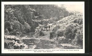 AK Neuseeland, Crystal mountain streams which help produce the finest lamb, Flusspartie
