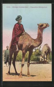 AK Senegal, Chamelier Sénégalais, Senegalese auf einem Kamel
