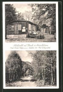 AK Wittgendorf, Sattelwald mit Baude und Aussichtsturm