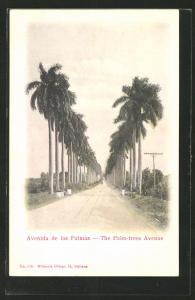 AK Habana, Avenida de las Palmas