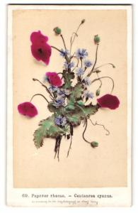 Fotografie F. Fridrich, Prag, Klatschmohn - Papaver rhoeas & Kornblume - Centaurea cyanus