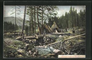 AK Köhlerhütten im Harz, Forstwirtschaft