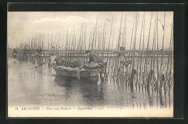 AK Arcachon, Parc aux Huitres, Oyster bed, Austernfischer bei der Arbeit 0