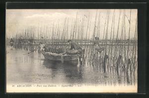 AK Arcachon, Parc aux Huitres, Oyster bed, Austernfischer bei der Arbeit