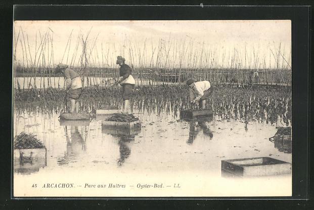 AK Arcachon, Parc aux huitres, Oysters Bed, Austernsammler bei der Arbeit 0