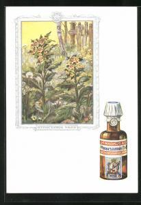 AK Dr. Madaus homöopathische Heilmittel, Bilsenkraut