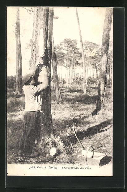 AK Dans les Landes-Cramponnage des Pins, Forstwirtschaft 0