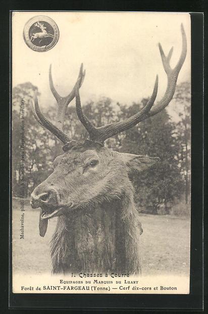 AK Saint Fargeau, ein Hirsch im Visier, Jagd 0