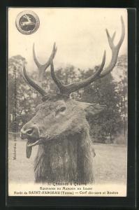 AK Saint Fargeau, ein Hirsch im Visier, Jagd